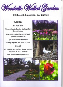 Tulip Day  26th April 2014